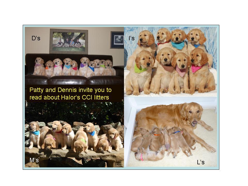 Halor's pups