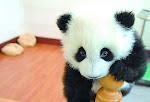 Panda Pandita...