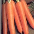 Propriétés et avantages de carottes
