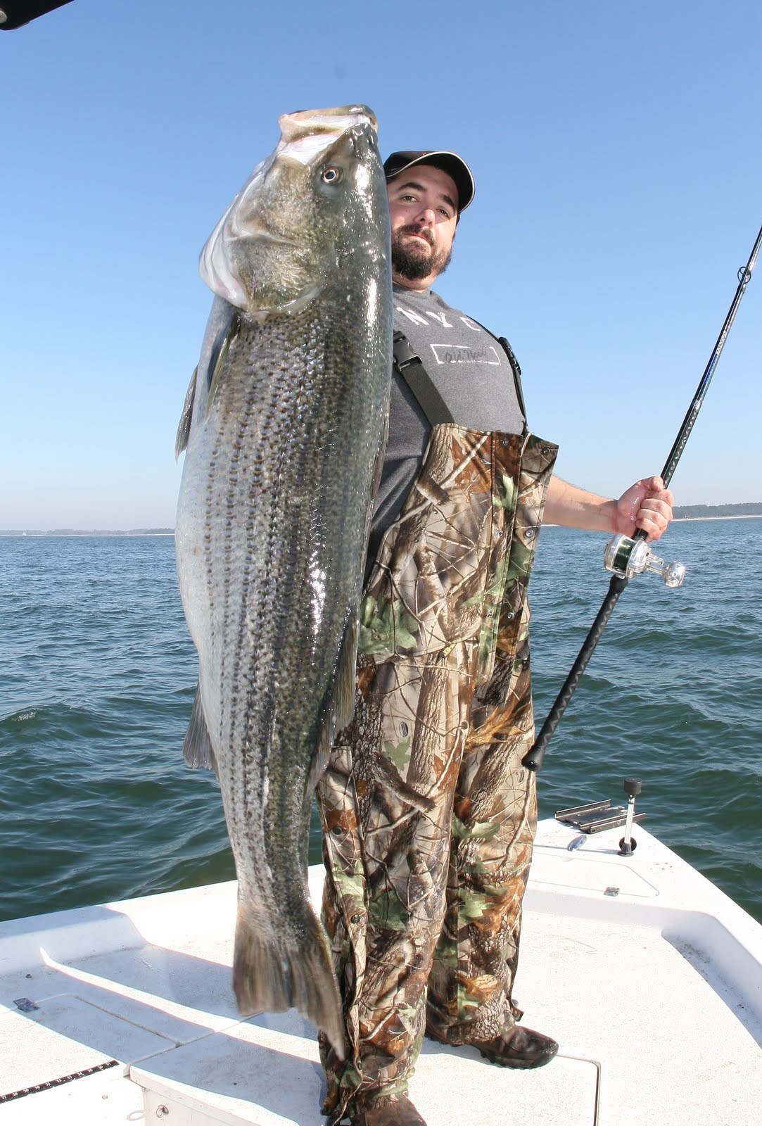 Striped bass with team old school for Fishing for striped bass