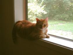 Our Guardian Cat- Orion