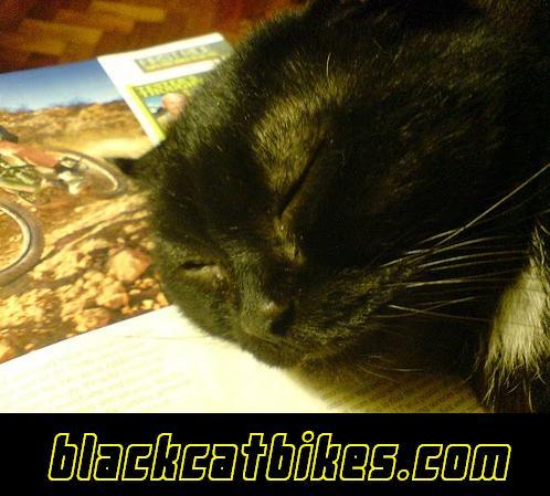 BLACK CAT BIKES