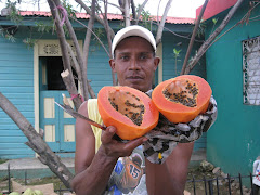 REP DOM 9 Papaya abierta