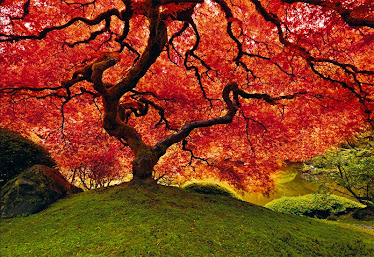 The Tree of Life by Peter Lik