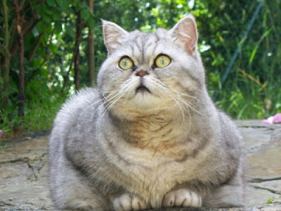 fat cat name is Julie