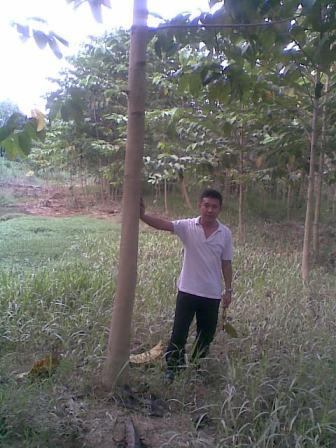 Contoh Hutan Rakyat