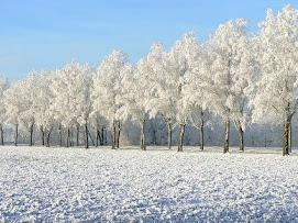 blanco invierno