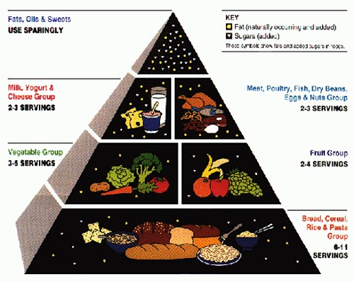 energy food chain pyramid. energy food chain pyramid.