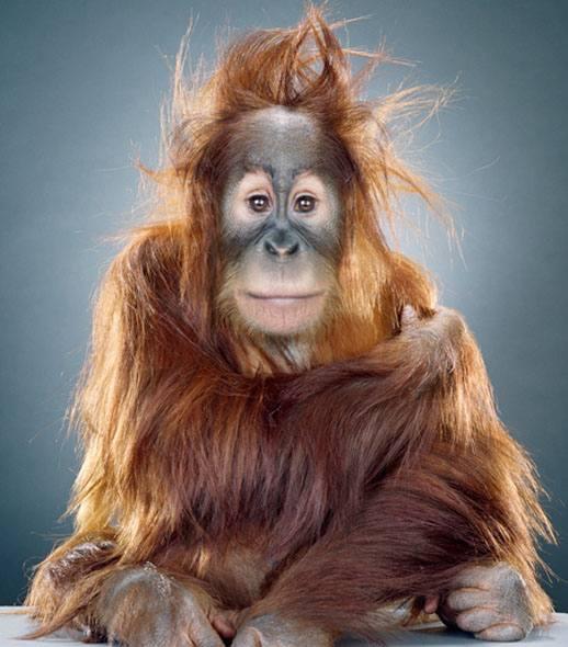http://3.bp.blogspot.com/_ioZTB-yzHp8/TJJSDp0cbDI/AAAAAAAAAFc/thSuWkqYX7U/s1600/monkey.jpg