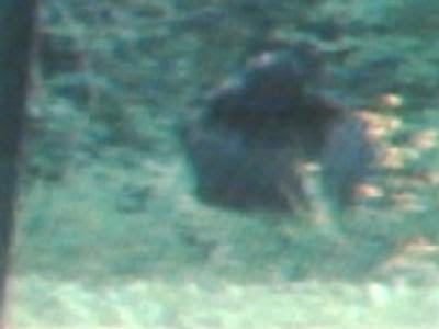 bigfoot-kentucky.jpg
