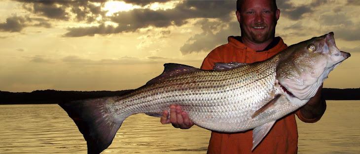 Striped bass fishing report for beaver lake arkansas for Beaver lake fishing guides