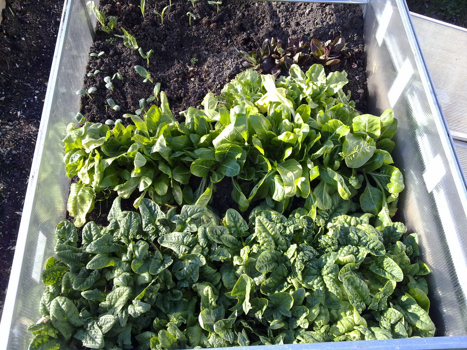 italian gardening cold frame winter garden results
