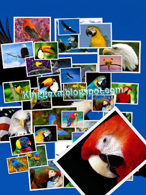 birds wallpapers. Beautiful Birds Wallpapers (HD