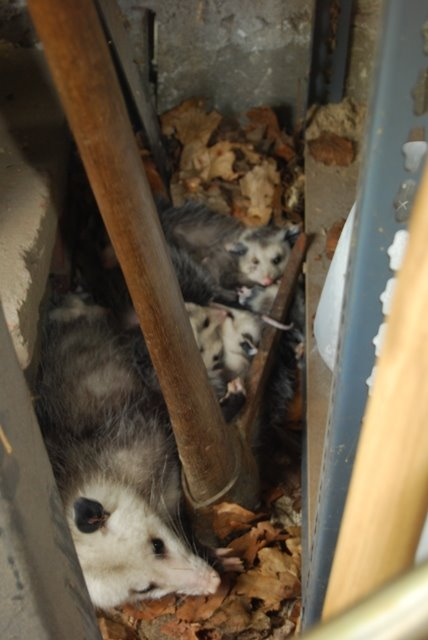 [Mum+Possum+&+kids.JPG]