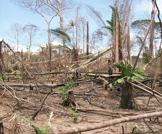 dangers of deforestation article Forests are important ecologically as well as economically indiscriminate deforestation is causing gradual loss of this exhaustible natural resource, with perilous impacts.