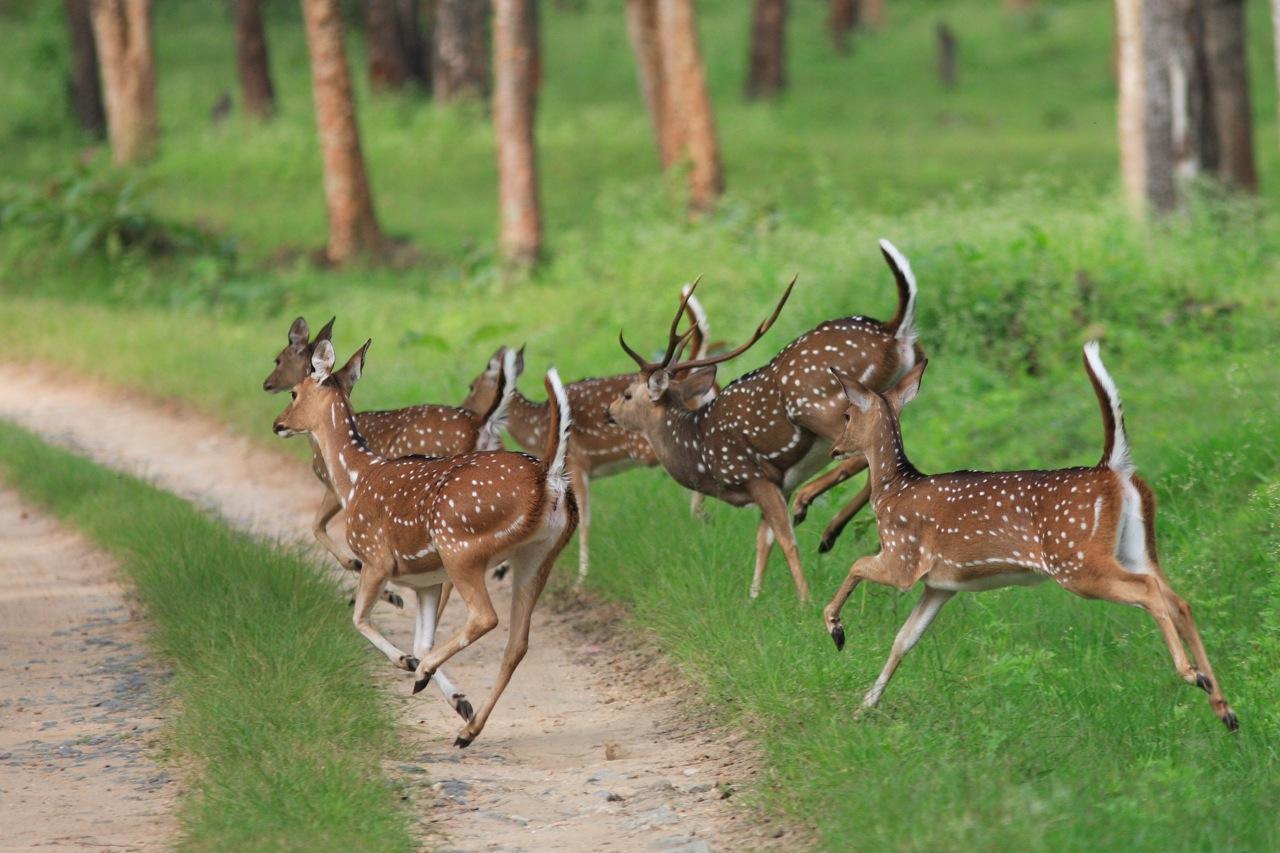 Wildlife Animals Pictures From Wildlife Animal Planet ...
