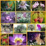 Collage de algunas plantas y flores imporantes