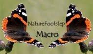 NF Macro