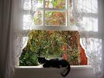 Eu serei para sempre a gata do Jardim ... saudades
