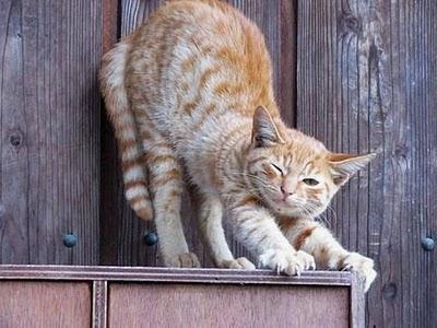 gato+dormido.bmp