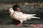 """""""Somos todos anjos de uma asa só, para podermos voar temos que nos abraçar"""""""