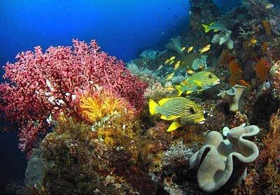 coral reef at archipelago raja ampat 5