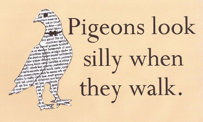 Pigeons Look Silly When They Walk!