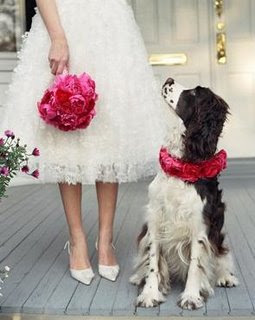 dog+ring+bearer Marley As Your Ring Bearer?