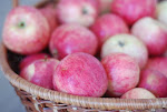 toite õuntest