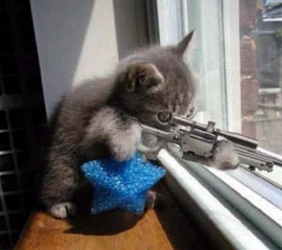 funny cats with guns pictures. Cats With Guns