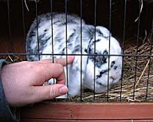 Blog mascot: (the late) Erasmus Bunny R.I.P.