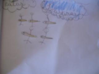 Metamorfose do sapo para crianças