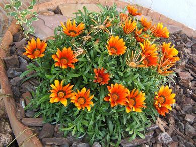El jardin y el cuidado de las plantas - Plantas para arriates ...