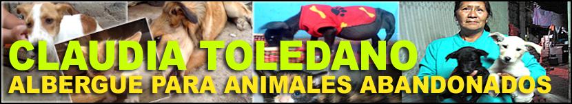 ALBERGUE DE ANIMALES ABANDONADOS CLAUDIA TOLEDANO