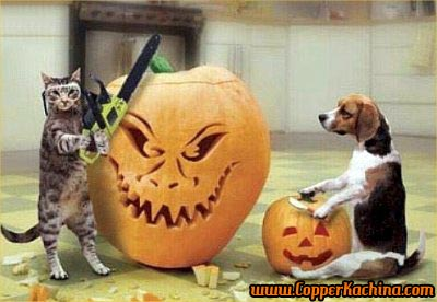 [cat-dog-carving-pumpkin.jpeg]
