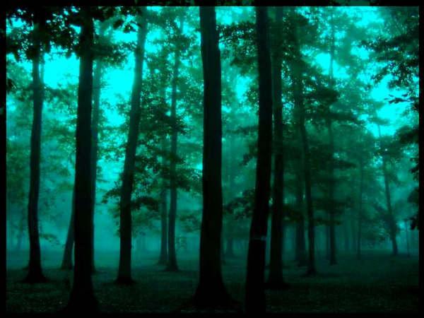 [bosque11.jpg]