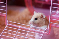 Find Cool Hamster Cages...