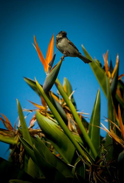 SWT+Photo 2 Photo #25 Birds of Paradise
