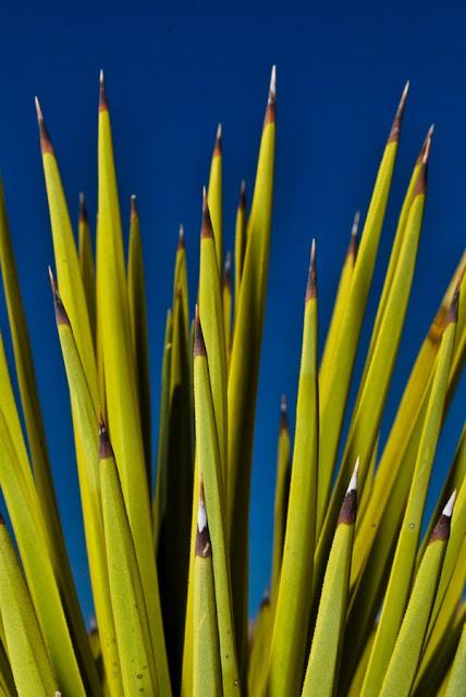 SWTphoto 6+lr Joshua Tree National Monument