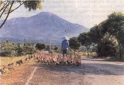 Baturaden