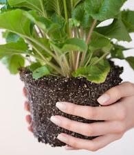 Plante decorative la birou