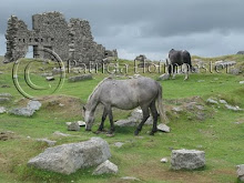 Horses on the moors