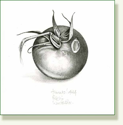 Drawing Of Tomato