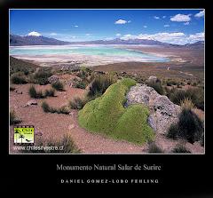 Chile Silvestre