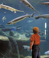 Boy at Aquarium
