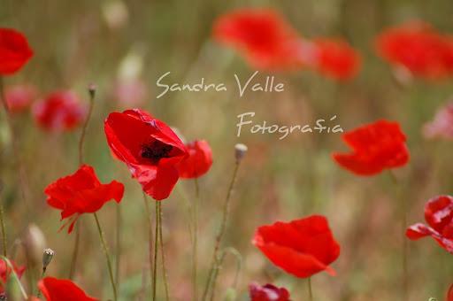 Sandra Valle Fotografía
