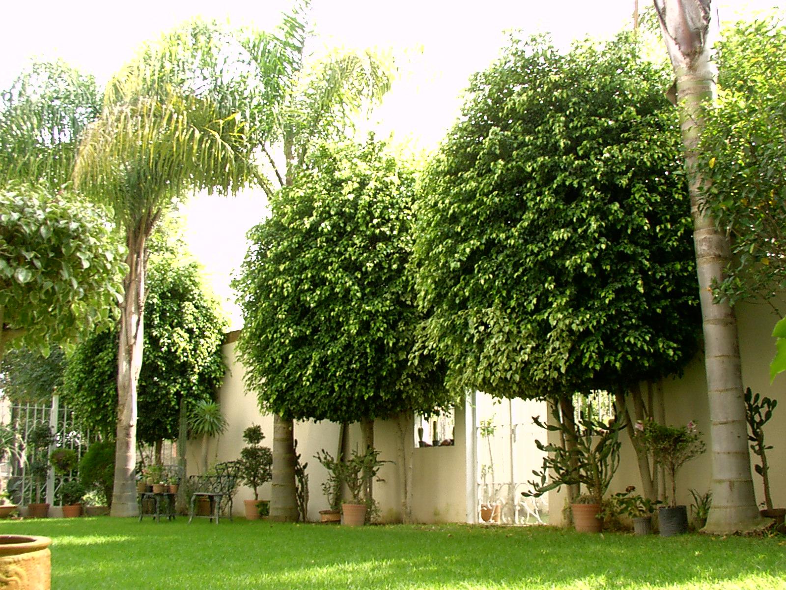 Sancarlosfortin ficus en el jardin en mexico for Jardines mexico