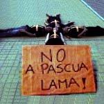 No a Pascua Lama
