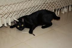 Faísca, o gato preto da bruxa