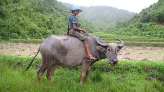 A kid on a water buffalo watching his fields